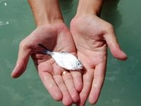 k-chemu-snitsya-lovit-rybu
