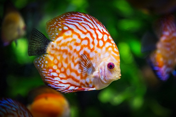 К чему снится женщине есть рыбу сонник