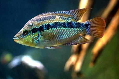 К чему снится рыба женщине сонник миллера
