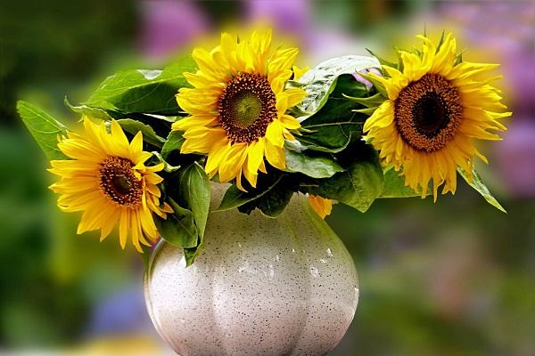 Сонник выбирать букет цветов