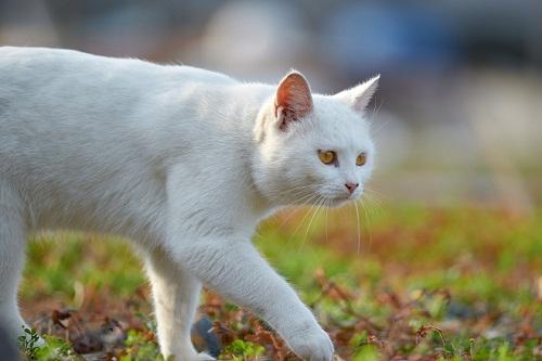 Сонник белая Кошка 😴 приснилась, к чему снится белая Кошка во сне видеть?