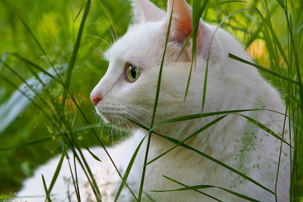 К чему снится белая кошка? Сонник белая кошка во сне.