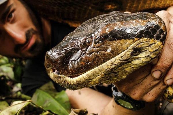 К чему снятся змеи? Сонник змеи во сне