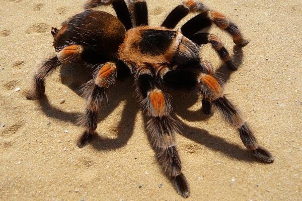 К чему снится паук - сонник: что значит, если видеть во сне большого паука