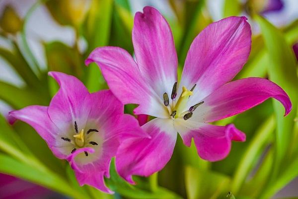 К чему снится цветок? Что значит цветок во сне