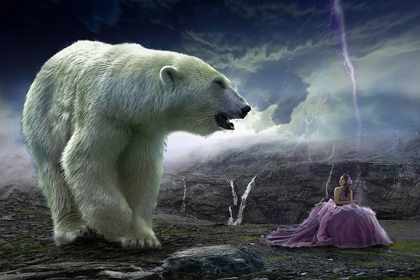 К чему снится медведь девушке? Сонник