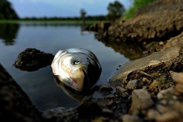 Дохлая рыба во сне беременной 57