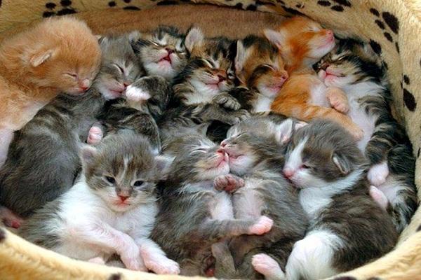 Сонник котята маленькие много разноцветные на сайте Сонник Гуру