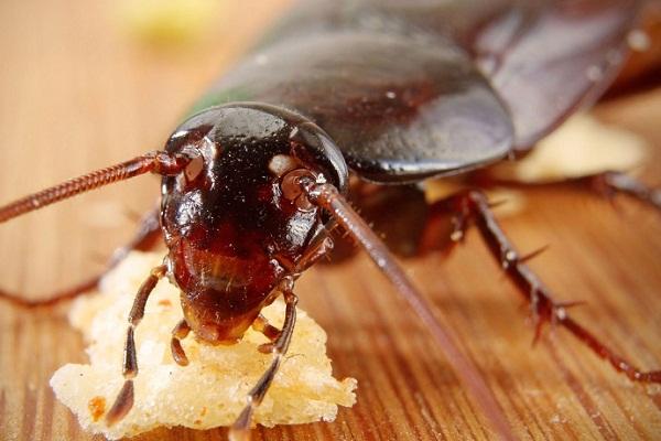 Сонник к чему снятся тараканы много убивать