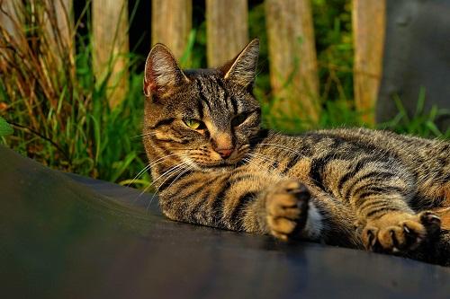 К чему снится искать кота во сне