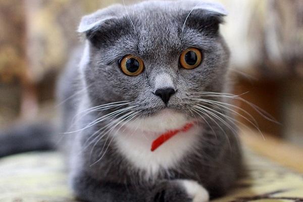 К чему снятся кошки Кошка или много кошек во сне что