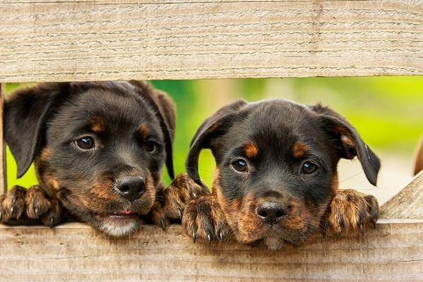 собаки с щенками