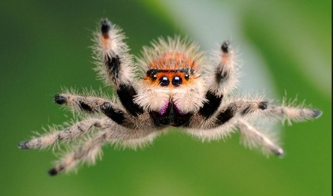 К чему снится паук? Паук во сне - сонник Миллера, Ванги, Фрейда, Эзопа и др