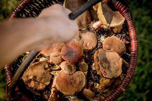 К чему снится сбор грибов беременной 43