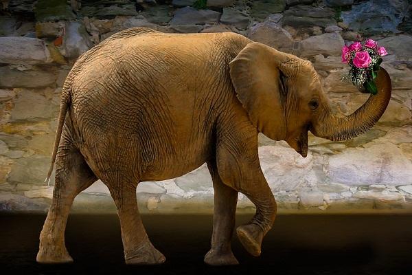 Сонник толкование снов к чему снится слон