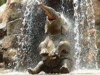 k-chemu-snitsya-slon
