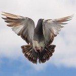 k-chemu-snitsya-golub