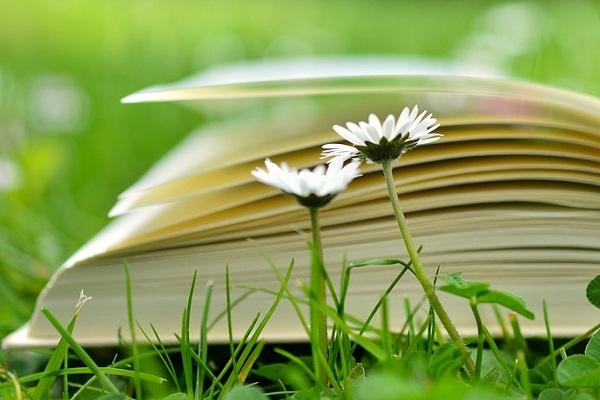 Сонник колдуньи медеи читать