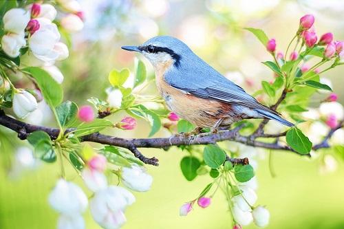 К чему снится весна? Сонник - весна во сне