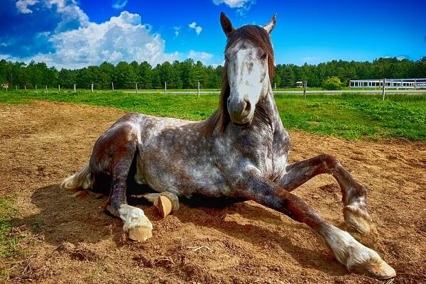 Сонник мужчина на бричке запряженной лошадьми