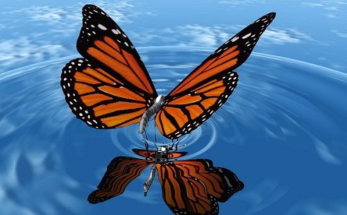 papillon sur l