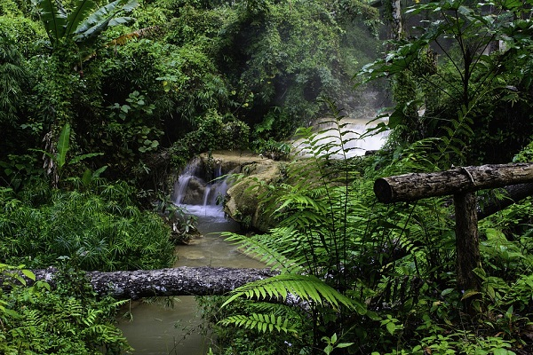 К чему снится лес. Сонник – лес во сне