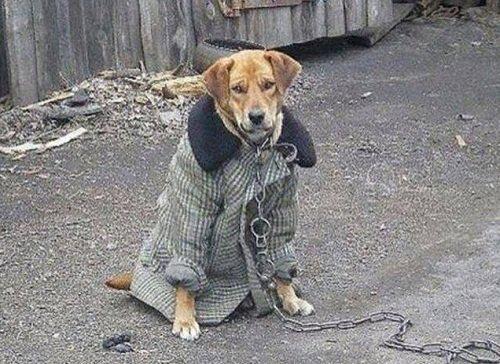 k-chemu-snitsya-palto 6