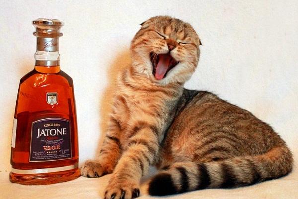 Сонник пьяный к чему снится пьяный во сне