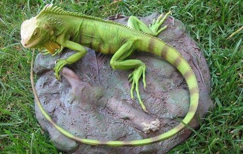k-chemu-snitsya-iguana 2
