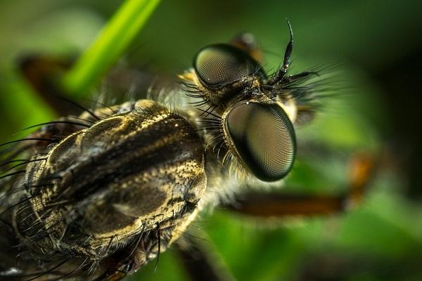 Сонник насекомые в доме на полу много