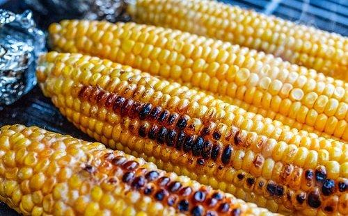 k-chemu-snitsya-kukuruza-2