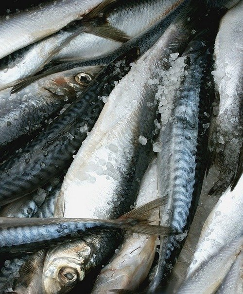 kak-zasolit-rybu-15