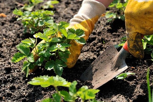 Сонник сажать дерево в землю