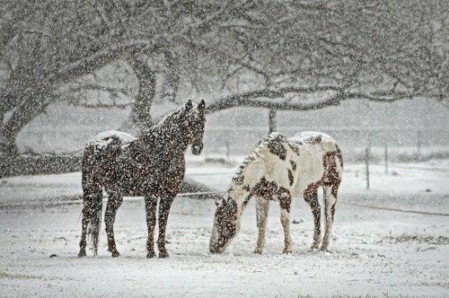 k-chemu-snitsya-snegopad 3