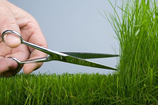 К чему снится обрезать, сонник – обрезать во сне    Сонник обрезать деревья