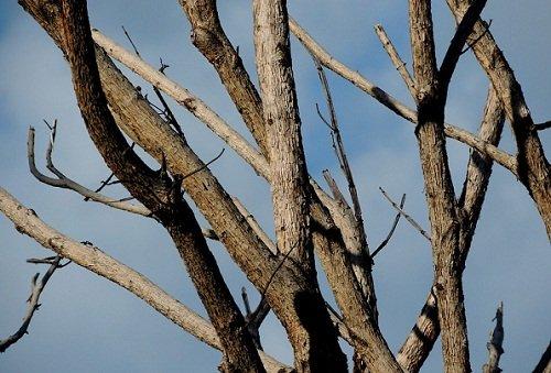 Сухое дерево рубить сонник