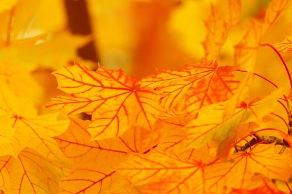 Сонник желтый цвет приснился к чему снится желтый цвет во сне