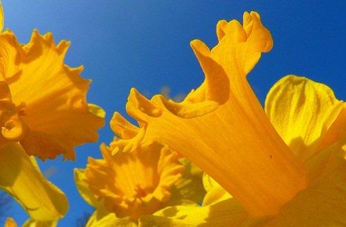 k-chemu-snitsya-zheltyj-cvet 2