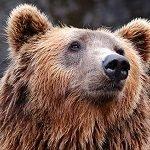 k-chemu-snitsya-medved 4