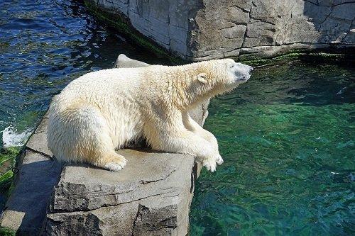 k-chemu-snitsya-medved