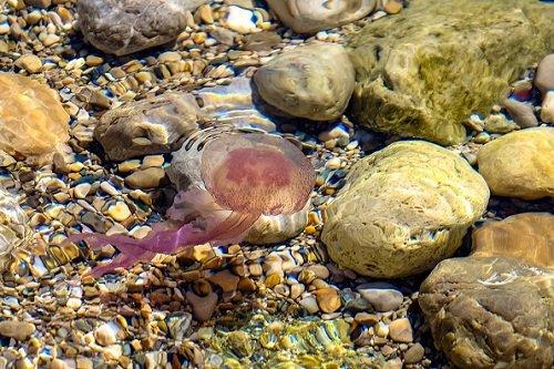 k-chemu-snitsya-meduza 3