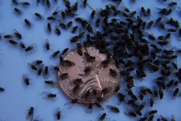 К чему снятся мухи женщине и мужчине сонник