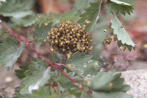k-chemu-snitsya-mnogo-paukov 3