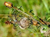 k-chemu-snitsya-mnogo-paukov
