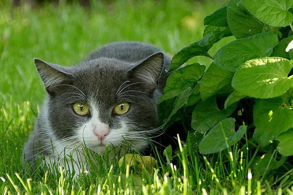 К чему снится 😴 Кот во сне — по 90 сонникам! Если видишь во сне Кот что значит?