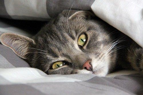 Сонник гадит кот