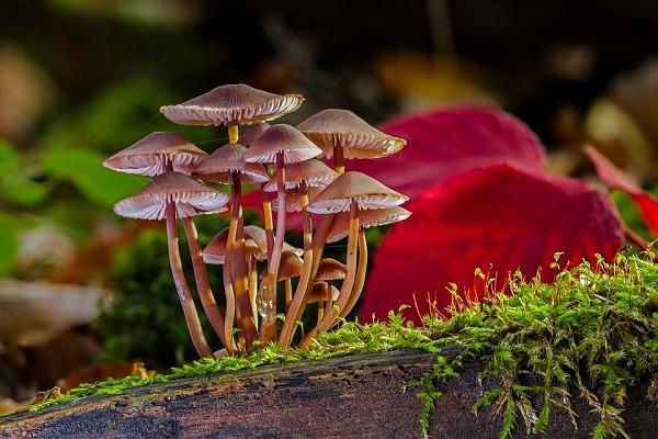 приснились белые грибы со вторника на среду