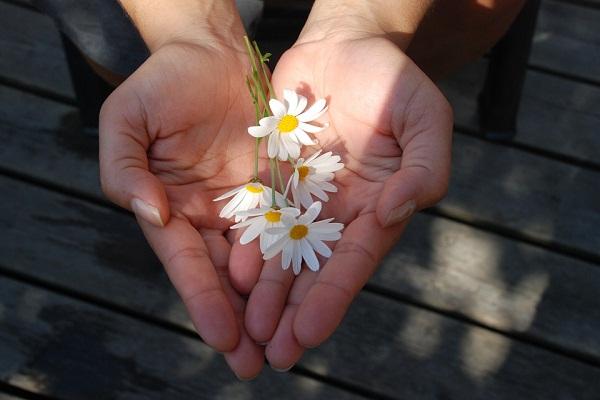 Можно ли дарить цветы больному раком сонник