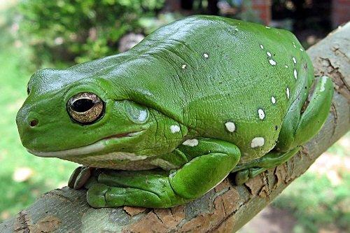 К чему снятся лягушки: толкование сна по соннику