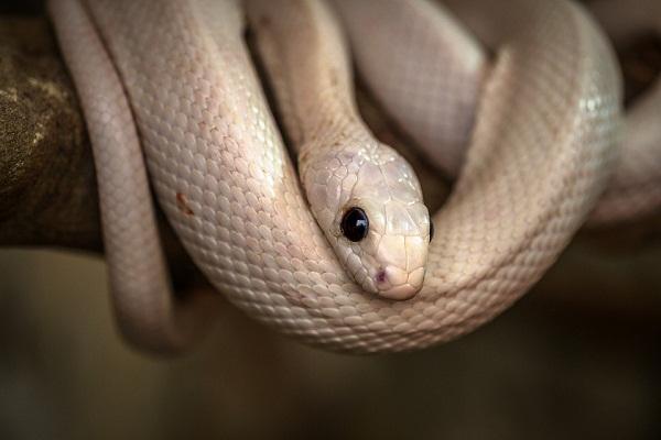 Белая змея во сне к чему